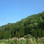 田舎の原風景、新緑の写真で癒されましょう